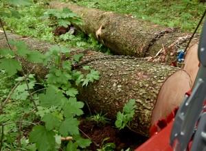 Pri Dragatušu drevo zmečkalo 46-letnega delavca
