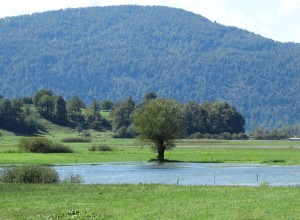 Poplave pojenjajo, Ljubljanica in Krka se bosta do sobote vrnili v strugi