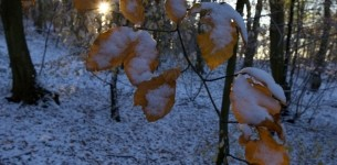 jesenski sneg
