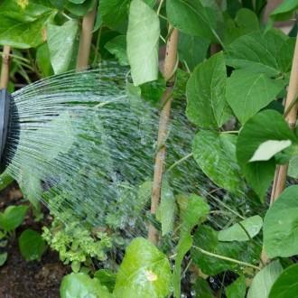 Še vedno je osnovna dejavnost na vrtu zalivanje. 2- krat dnevno, zjutraj in zvečer, ko je zemlja hladna, še vedno zalivamo vrt.