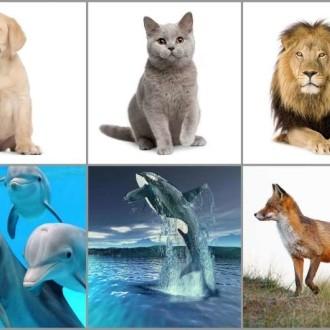živali