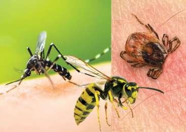 Nadležni in nevarni ose, komarji in klopi