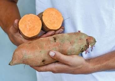 Sladki krompir, super hrana iz Amerike