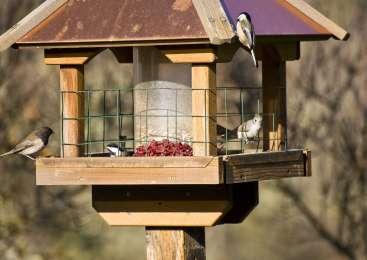 Naredite suho kopel za vaše ptice na vrtu!