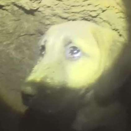 Pasjega mladička rešili iz globokega jaška