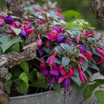 Balkonsko cvetje lahko preplačate tudi do štirikrat