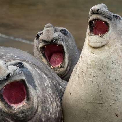 FOTO: Letošnje najbolj smešne fotografije živali obetajo salve smeha