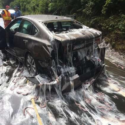 VIDEO: Ogabno! Cesto preplavile sluzaste jegulje
