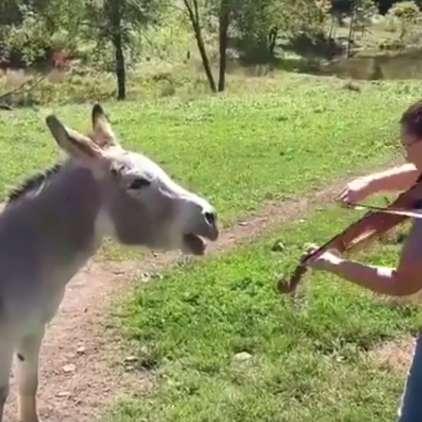VIDEO: Presunljivi duet dokazal, da glasba ne pozna meja