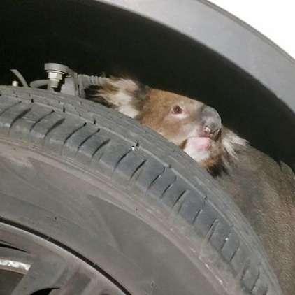 Med vožnjo je slišal čudne krike