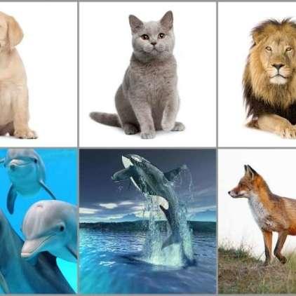 Najljubša žival pove prav vse o vaši naravi