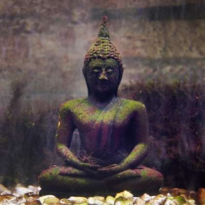 Odkrili kremirane ostanke Bude