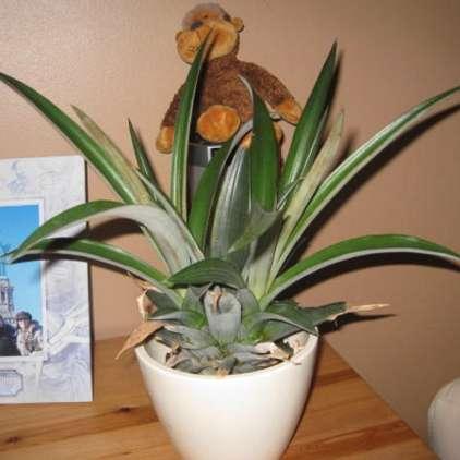 S to rastlino v boj proti smrčanju