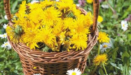 Čudovita naravna kozmetika iz regratovih cvetov
