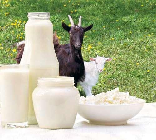 Se je mogoče okužiti z mlekom in pasjo slino?