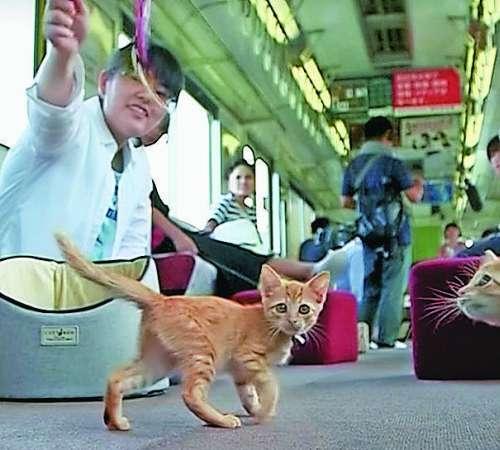 Mačke na vlaku za dobro jutro