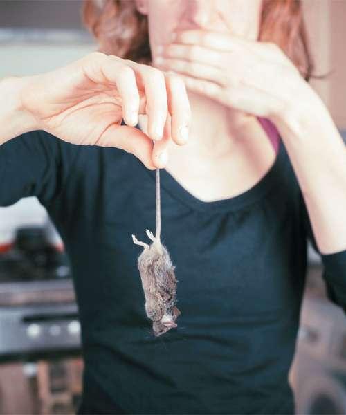 Leto mišje mrzlice