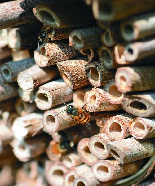 Gnezdilnice za čebele samotarke