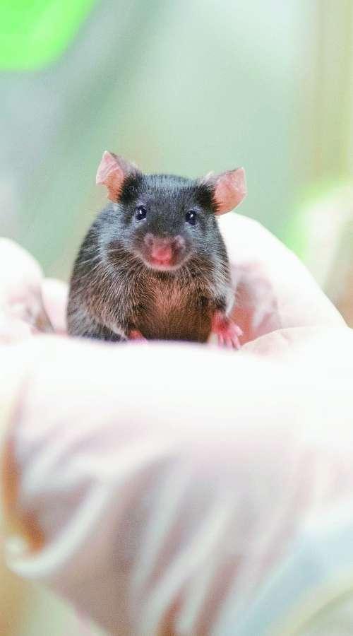 Na obisku pri laboratorijskih miškah
