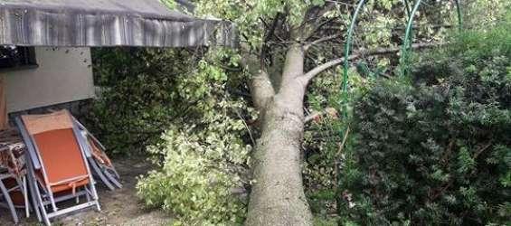 Podrto drevo, neurje