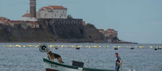 ribič, piranski zaliv, ribištvo, ribarjenje