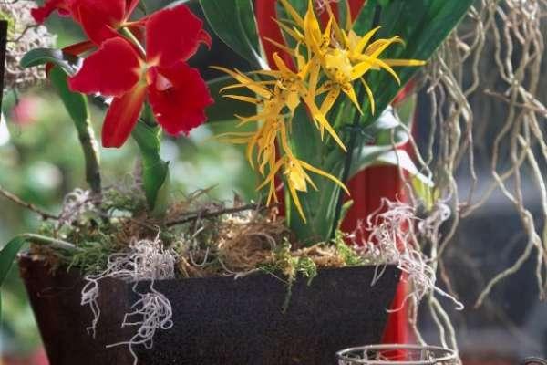 Orhideje poleti