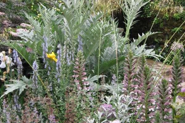 Pravi prostor za pravo rastlino  (3. del)
