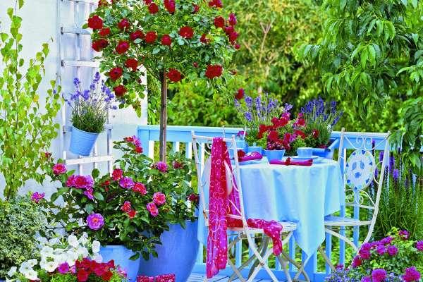 Ali naj bodo ljubitelji vrtnic, ki nimajo svojega vrta, prikrajšani za vso njihovo lepoto? Ni nujno, kajti tudi na balkonu ali terasi lahko ustvarimo lasten rozarij.
