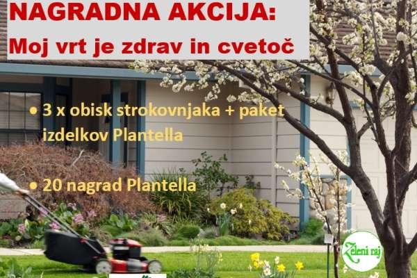 Plantella_b.png