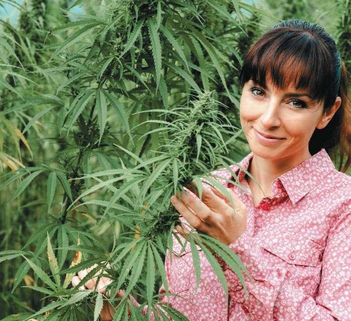 Konoplja, sveta rastlina za prebujanje duha