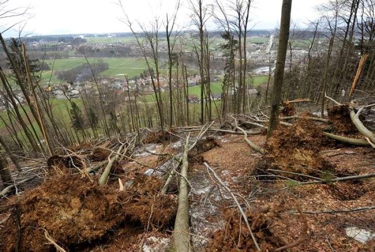 Pri Kobaridu je podrto drevo hudo zmečkalo delavca