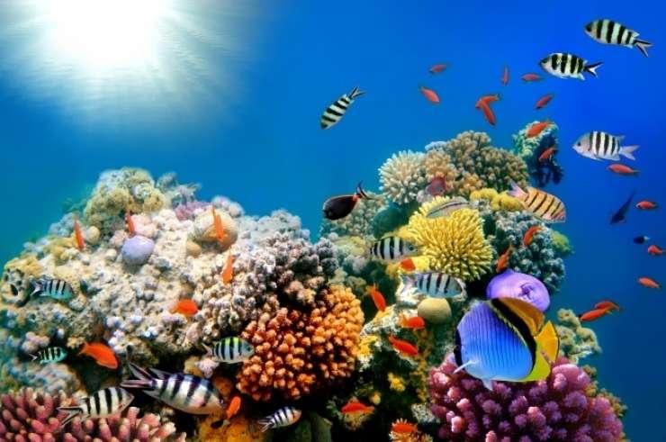 Ekološka katastrofa! Velik del koral je že mrtev
