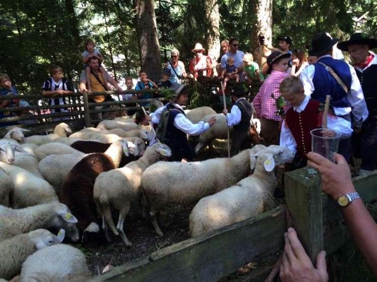 Na Jezerskem tradicionalni Ovčarski bal