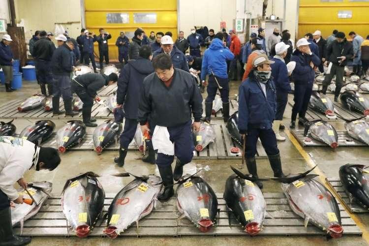 ribja tržnica, tuna, Japonska, Tokio