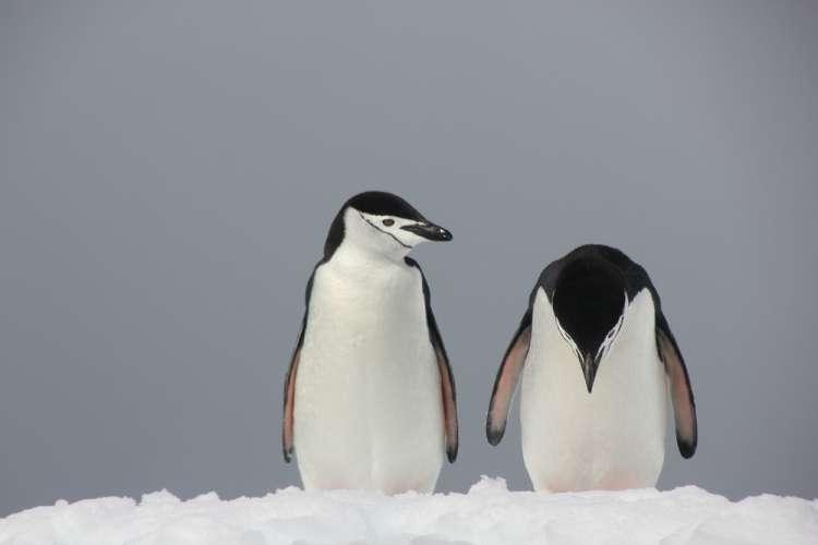 pingvin, Comedy Wildlife Photography Awards