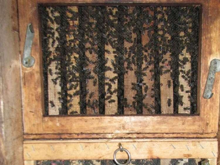 Čebelarstvo, čebelnjak, čebele