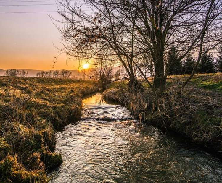 pomlad vreme drevo potok jutro tony