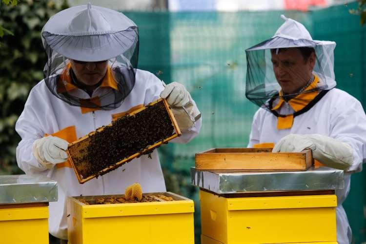 čebele čebelerstvo med čebelarji