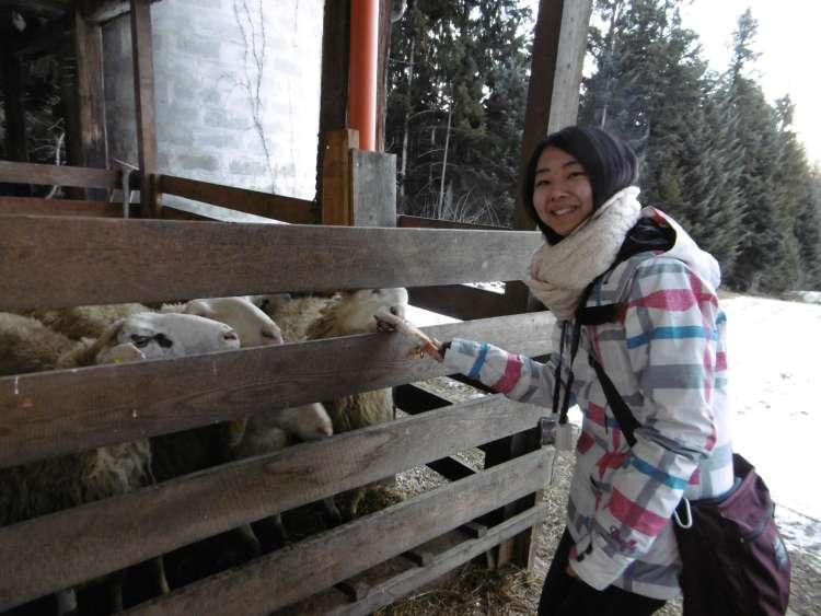 hranjenje ovac