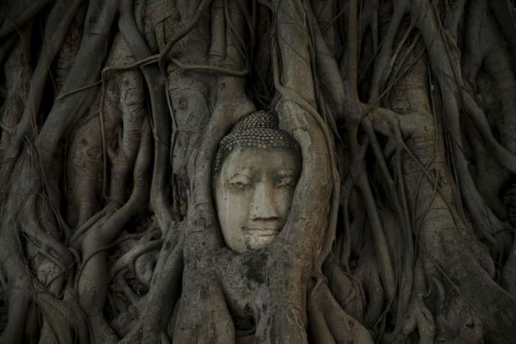 buda, drevo, glava, ajutaja, ayutthaya
