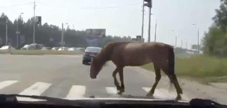 konj, cesta, nesreča