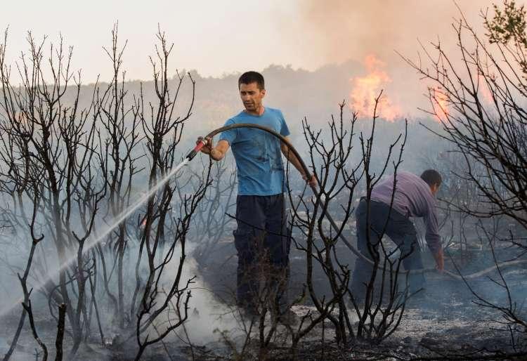 gozdni požar