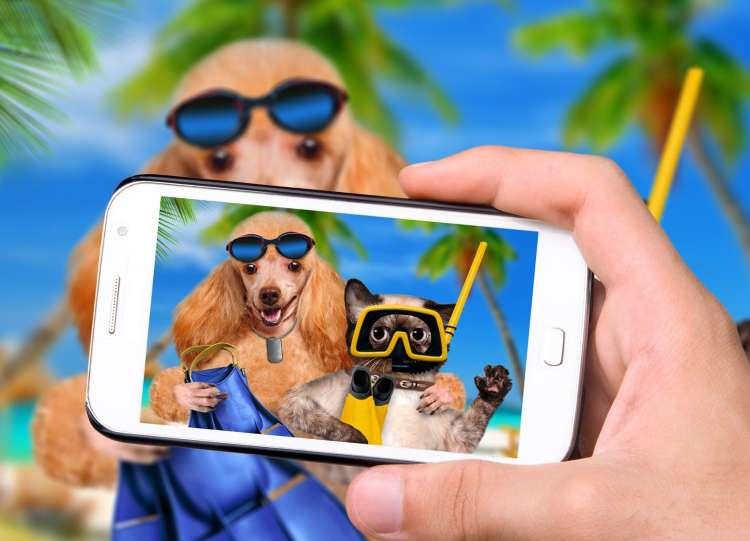 psi in mačke na dopustu