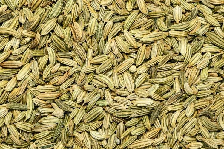 semena janeža