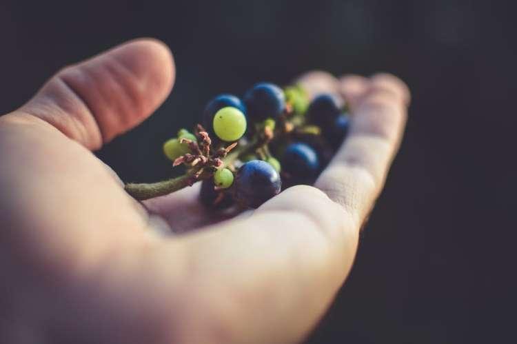 grozdje2.jpeg