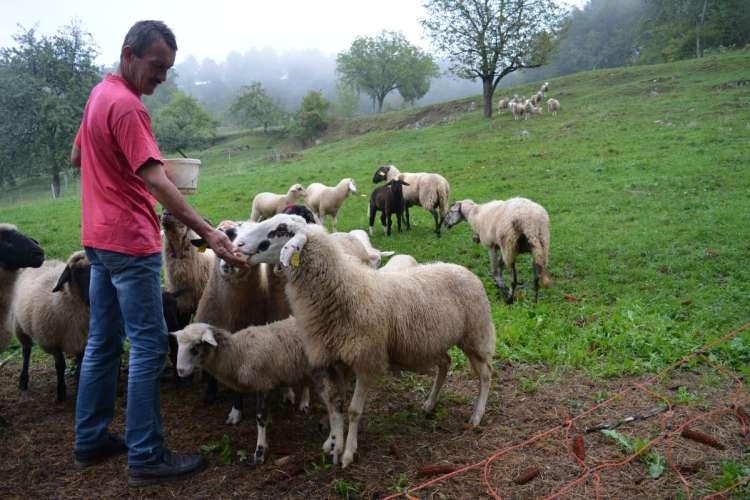 ovce_so_se_vedno_preplasene