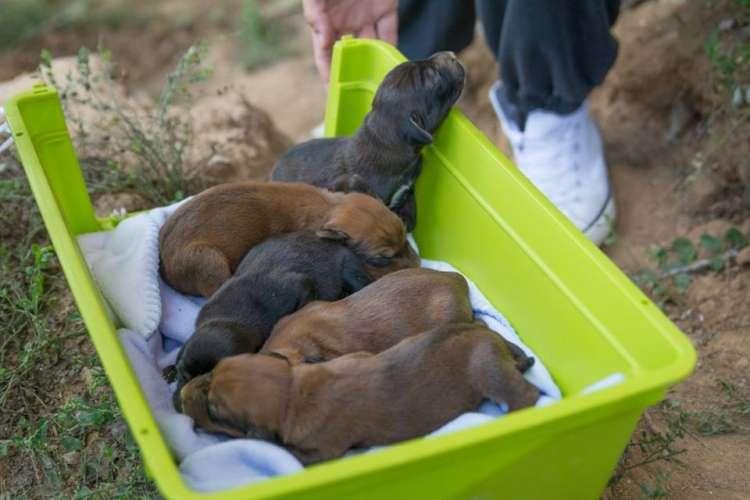 mladički, psički, pet, zakopani