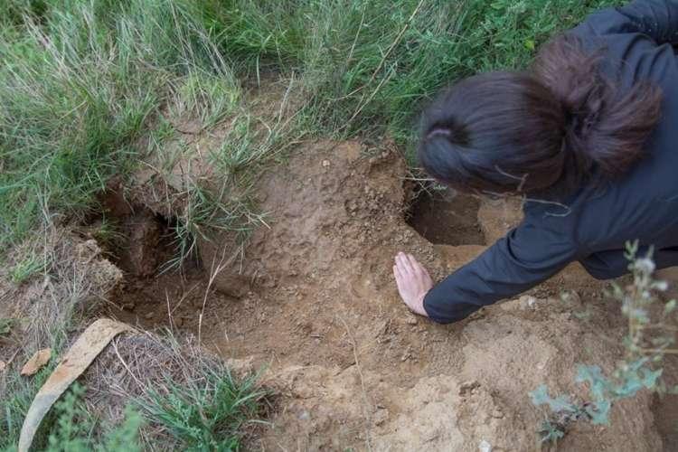 psi, rov, zakopani