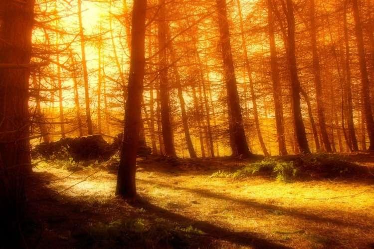 topla jesen, gozda, drevesa