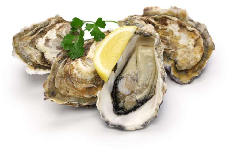fresh-oysters-isolated-white-background-67004789.jpg